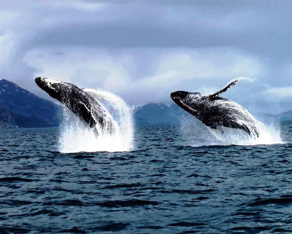 Кошечка, картинки китов